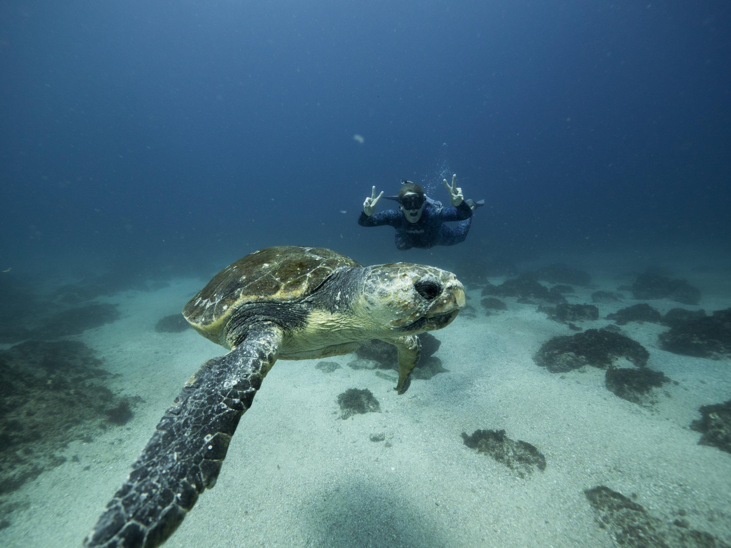 getdown freediving turtle byron bay.jpg