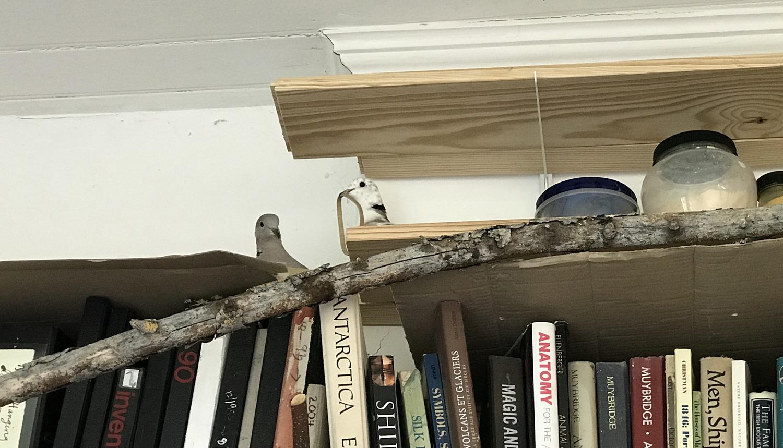 final nest creation