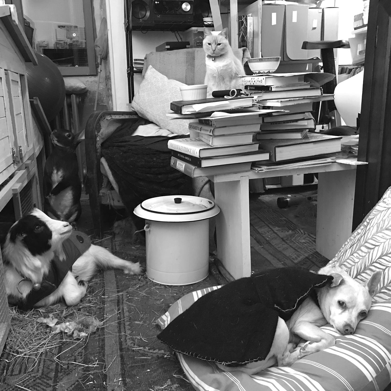 studio pets 4 pets b&w S.jpg