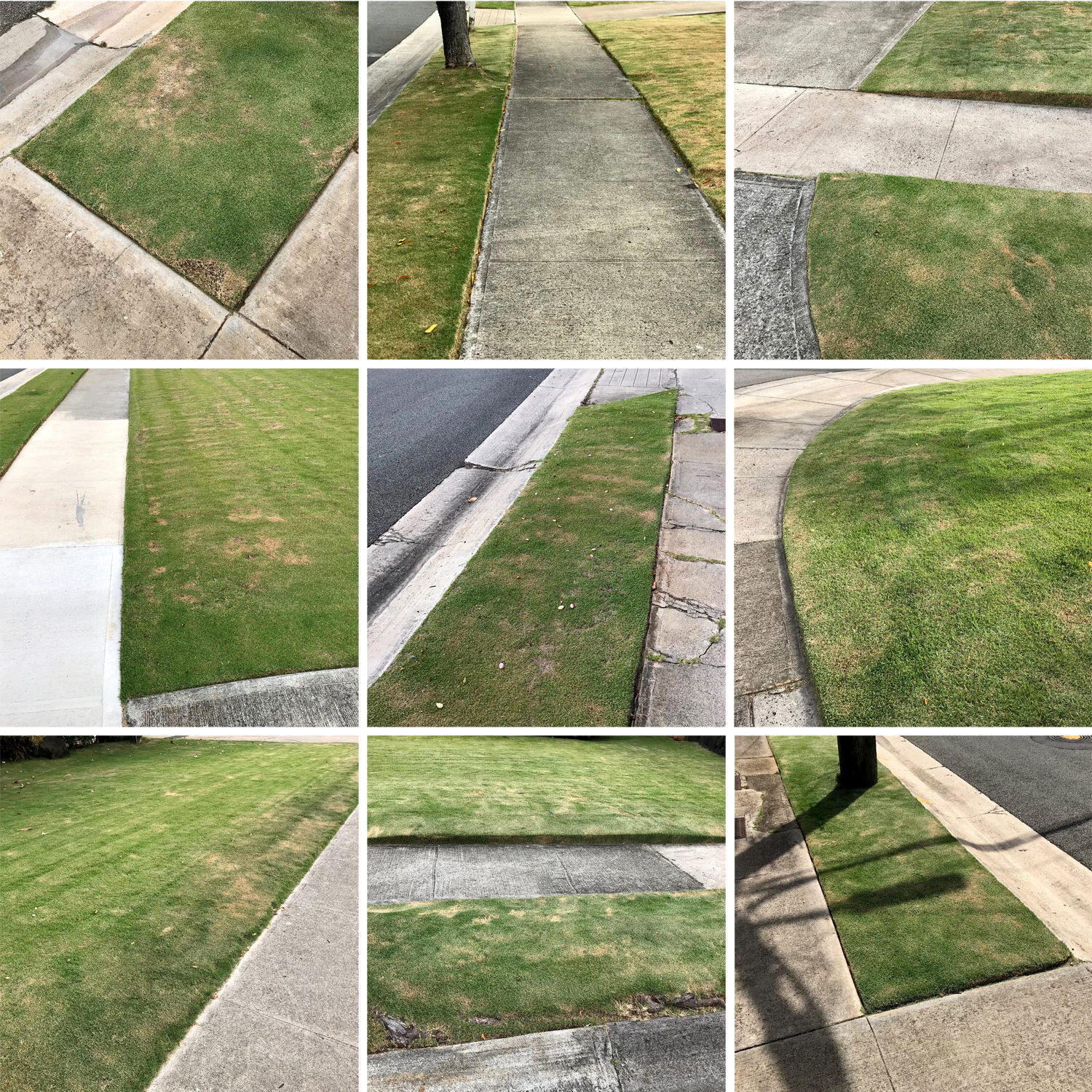 lawn group square for SS 72 dpi.jpg