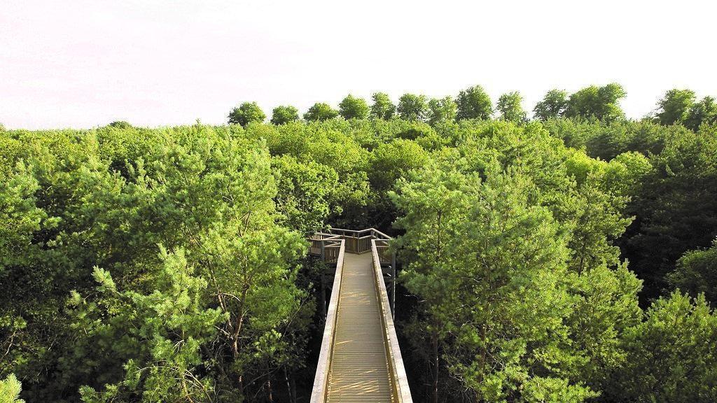 Salcey Forest 1.jpg