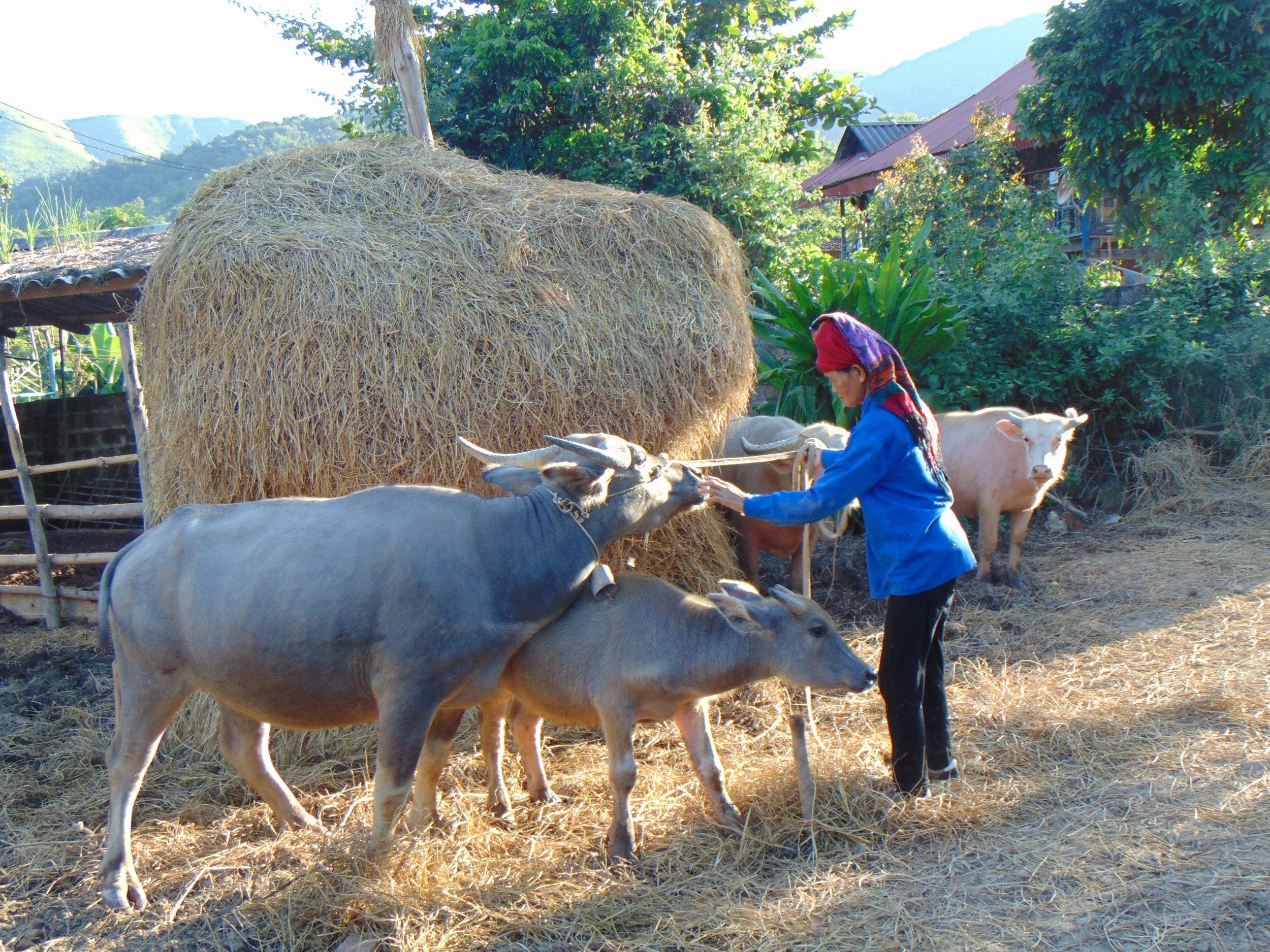 Anh Chị Em - Chương trình tín dụng vi mô - Chăn nuôi sản xuất