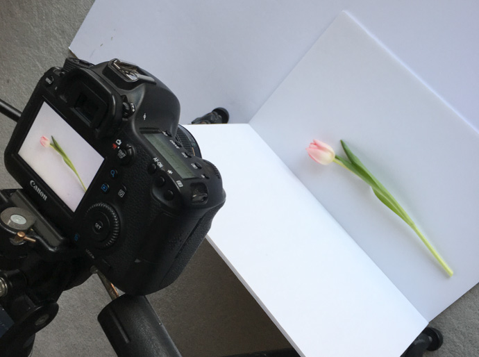 The reflector needs to be closer than you think to the flower to soften the shadows