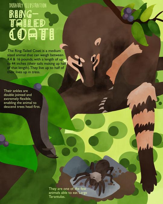 coatiiiii fw.jpg