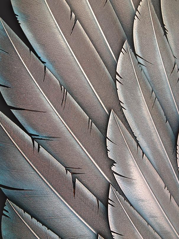 M&M_Copper Feathers_Close-Up.jpg