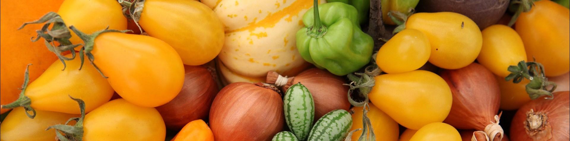 threecounties-rhs-malvern-autumn-rainbow-veg.jpg