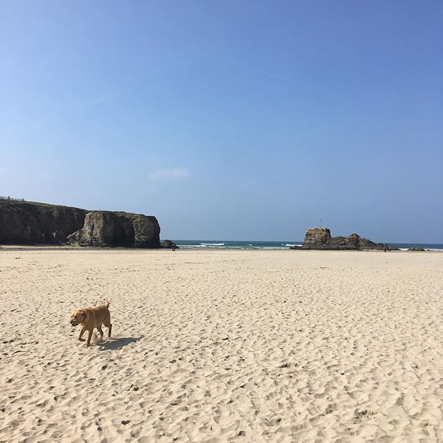 Blues skies, soft sands and four-legged friends Rockpoolholidays #beachdogs #dogslife