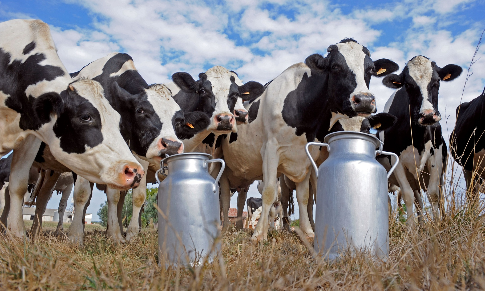 dairy-farmer.jpeg