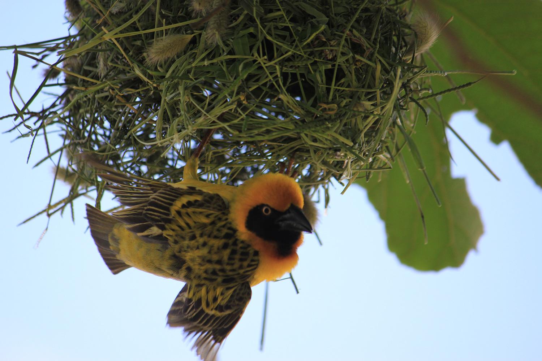 safari_bird_1500.jpg
