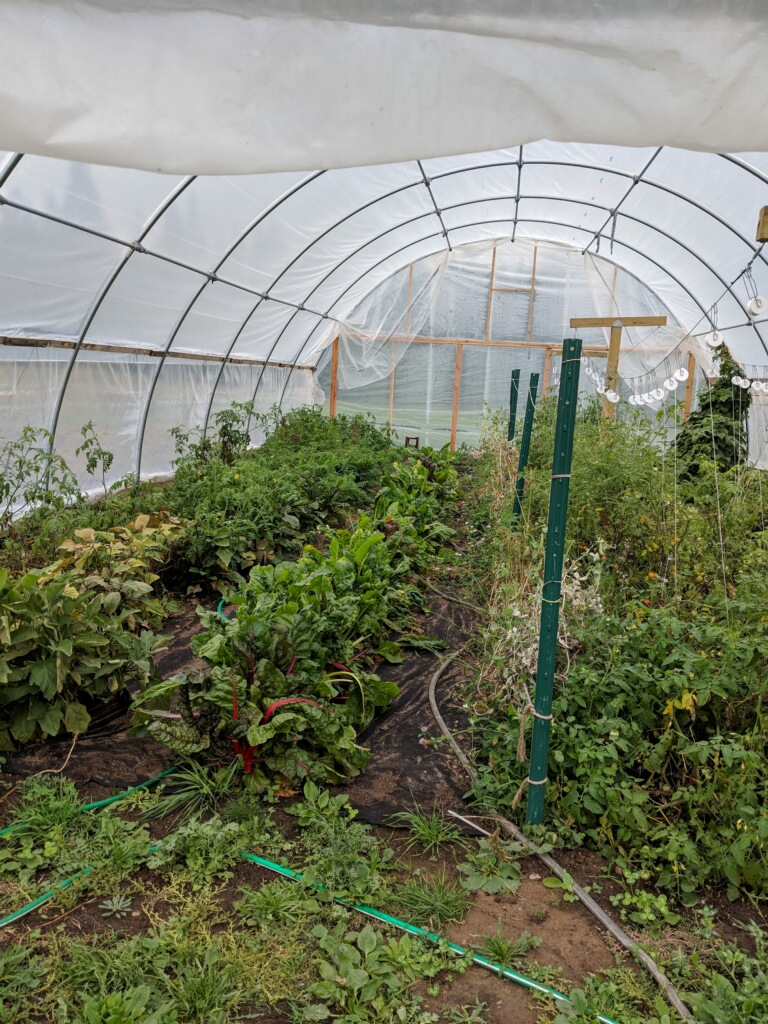 Early Frost hoop house.JPG