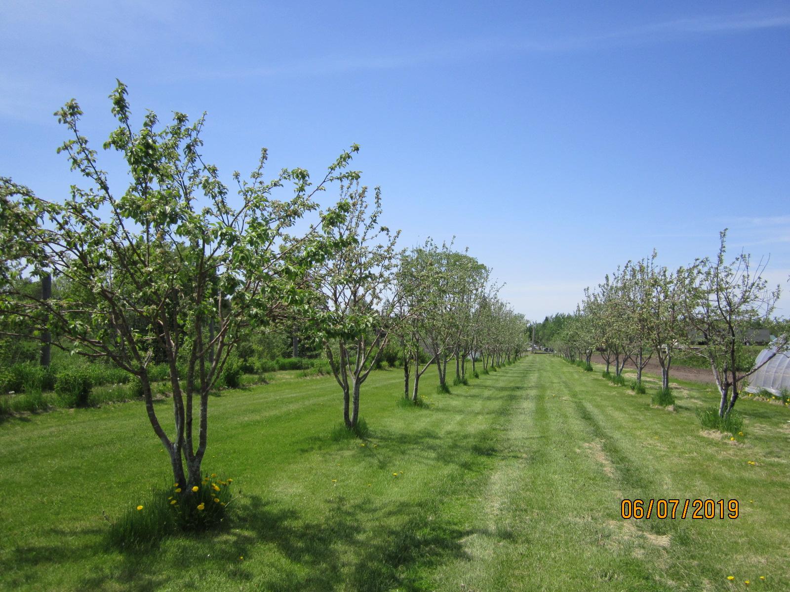Skunk Creek Farm orchard.JPG