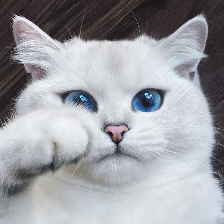 white-cat-with-blue-eyes-3.jpg