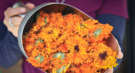 Dried Calendula, raleigh plastic surgery, plastic surgery cary nc, breast implants raleigh nc, cary plastic surgery, breast implant, boobjob, silicone implants. breast surgery, plastic surgery boobs, augmented breasts, silicone boobs, average cost of boob job, breast implant sizes, boob implants, silicone breast implants, saline breast, cost of boob job