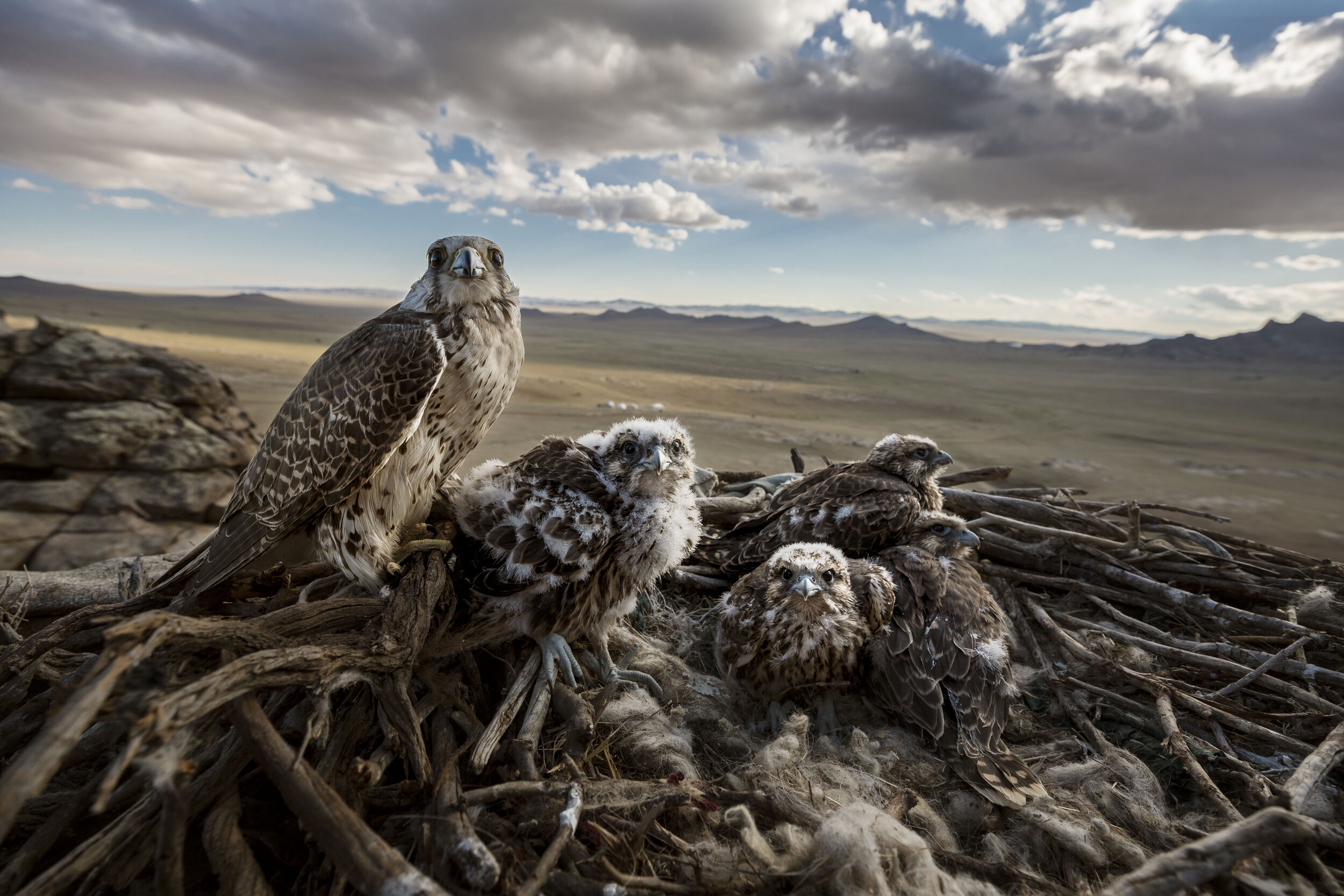 096_Brent Stirton_Getty Images_for National Geographic.jpg
