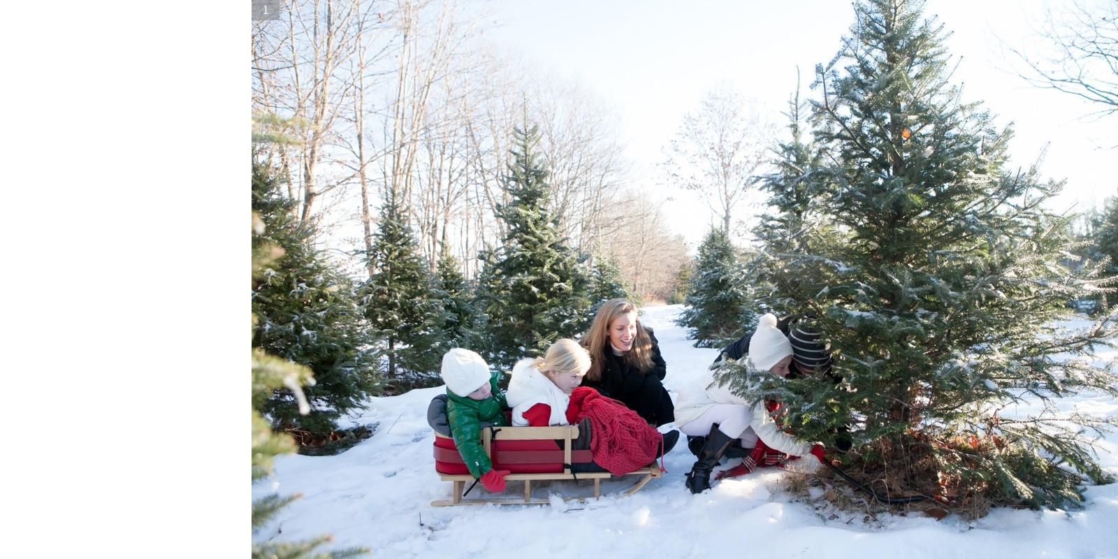 <b>CHRISTMAS TREE</b><br>Schneider Family