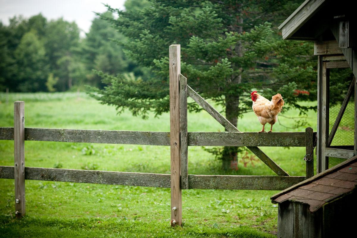day_at_farm_portrait_0011.jpg