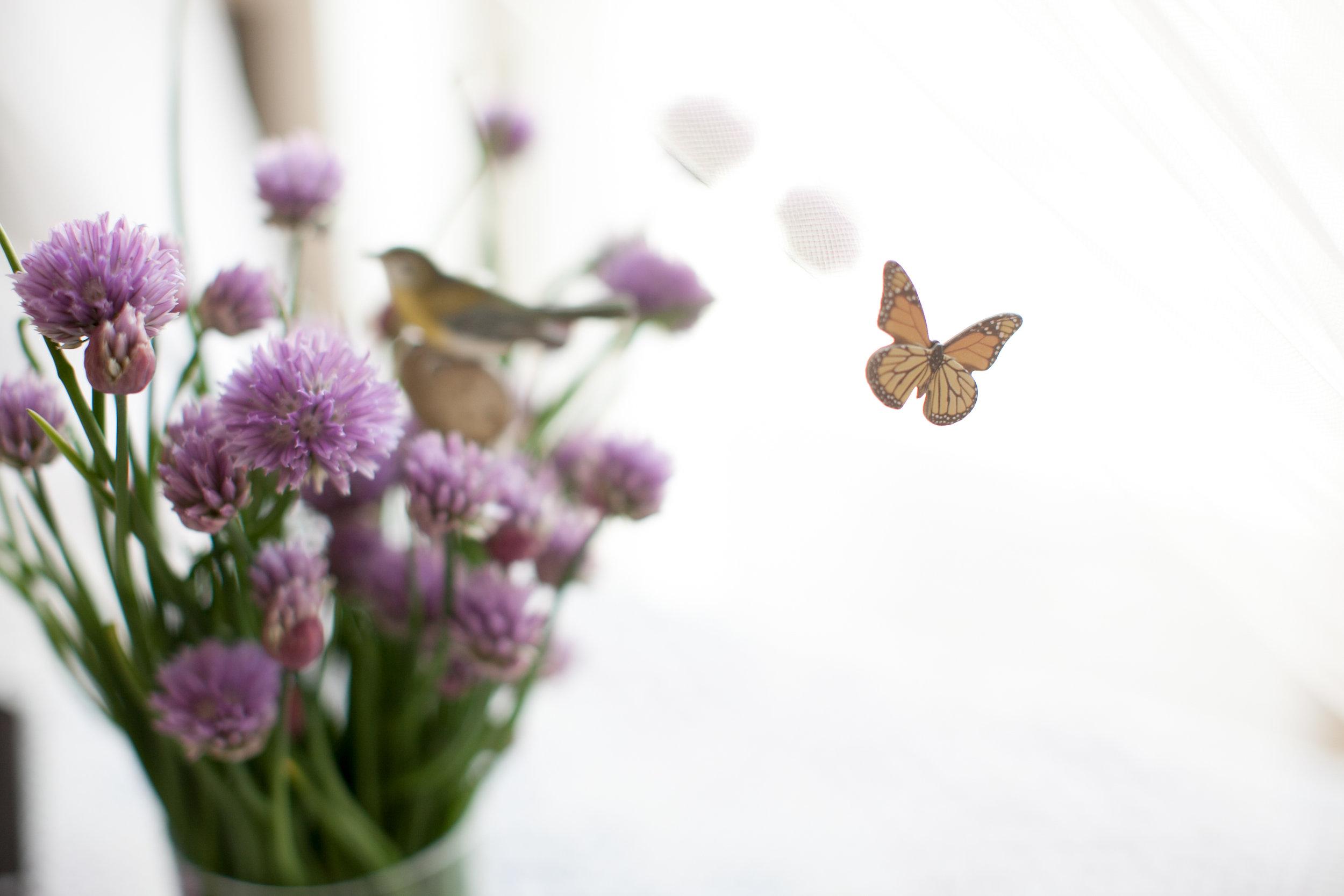 butterfly_tea_party_0008.jpg