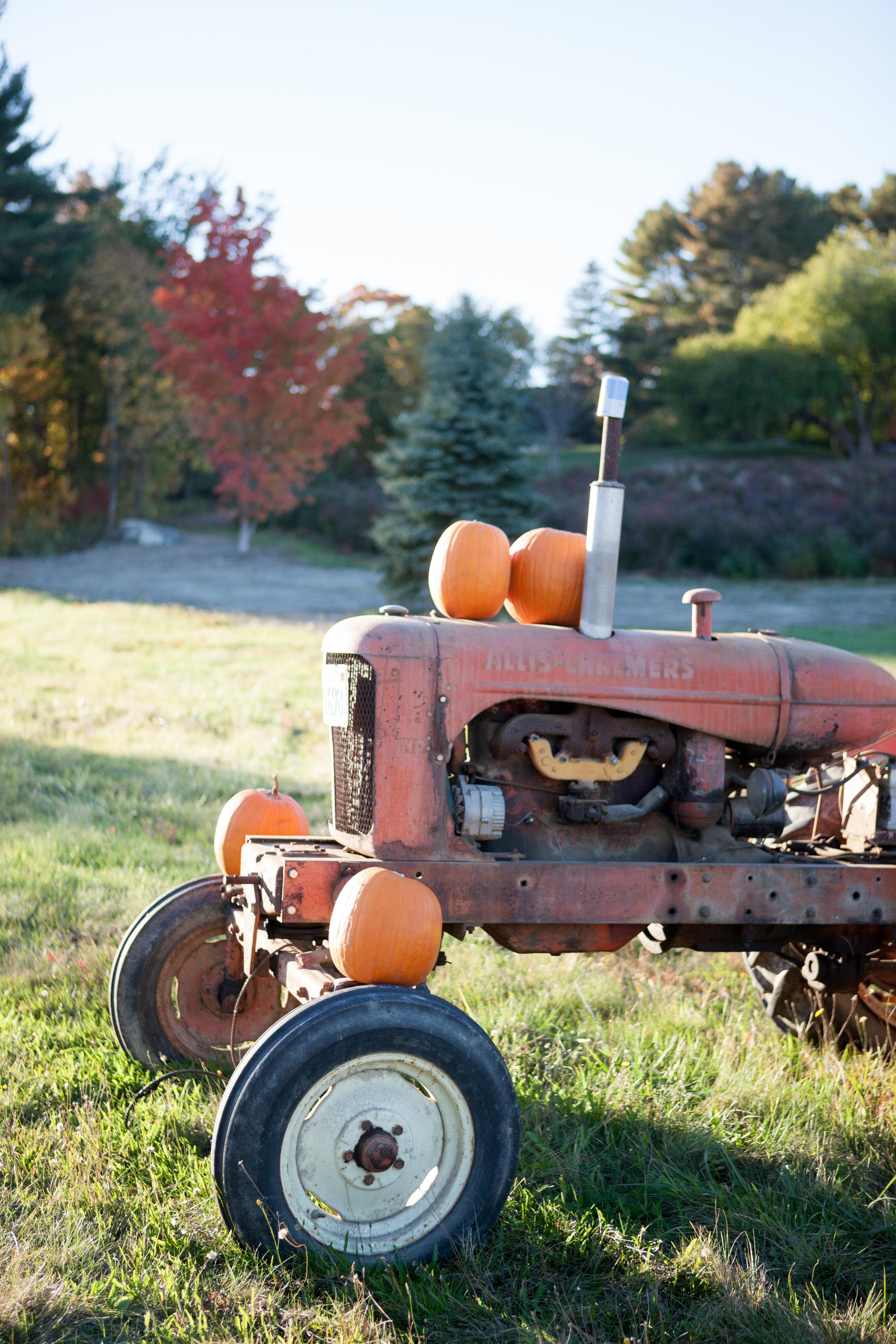 pumpkin_patch_0005.jpg