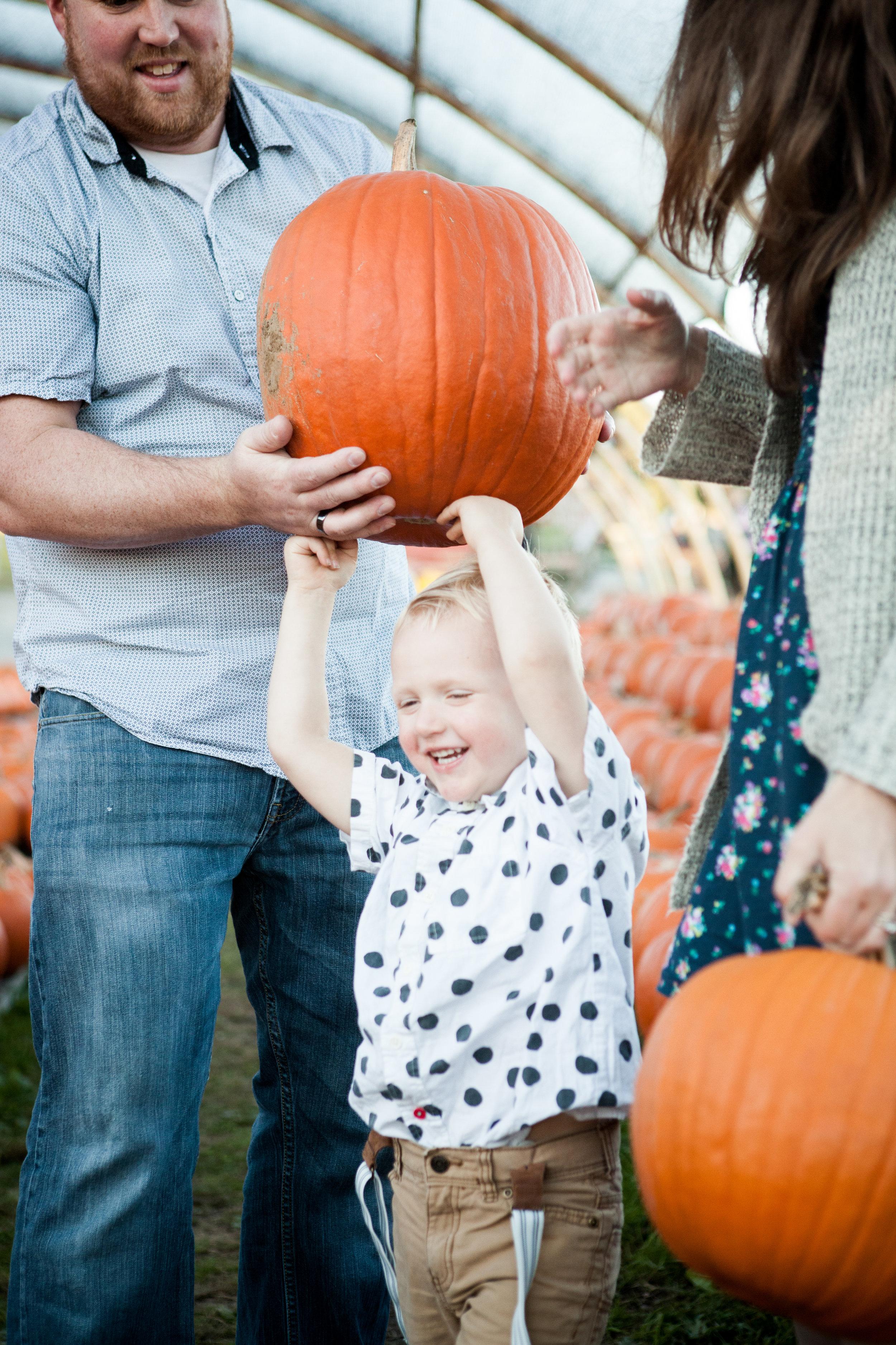 pumpkin_patch_0008.jpg