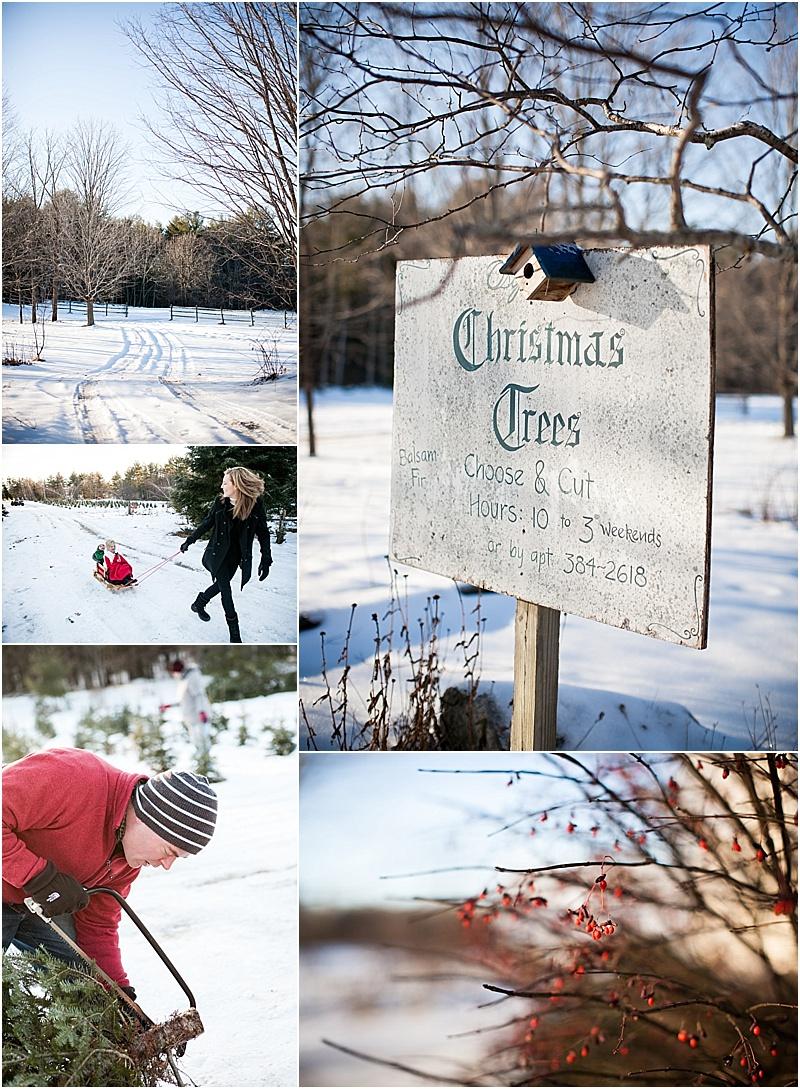 christmas_tree_farm_portrait_maine_0002.jpg