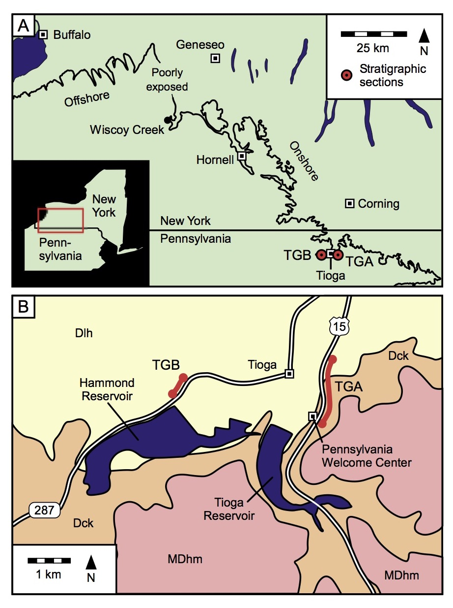Figure 5.A) Locations of outcrops in Tioga, north-central Pennsylvania, as well as the Wiscoy Creek locality in New York. The black line denotes the position of the Pipe Creek Formation, which is equivalent to the LKW (modified from Bush et al., 2015 and Woodrow, 1968). B) Geologic map of the Tioga area showing the locations of the TGB and TGA outcrops (modified from Berg et al., 1981). Dlh: Lock Haven Group (Caneadea Formation and below). Dck: Catskill Formation. MDhm: Huntley Mountain Formation. Figure is from Beard et al. (2017)