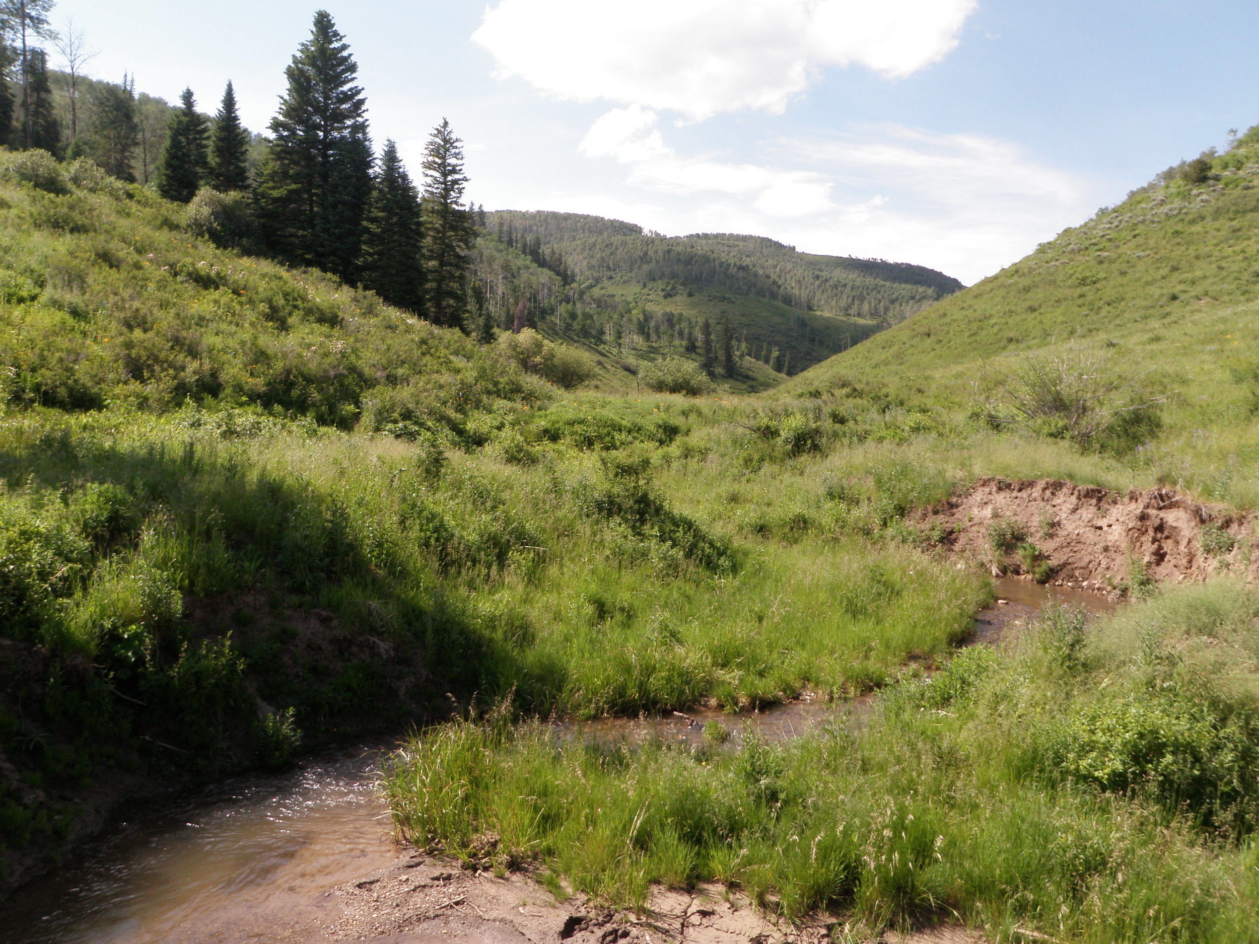 Extensive erosion and subsequent silt impacts cutthroat trout spawning at Butler Creek