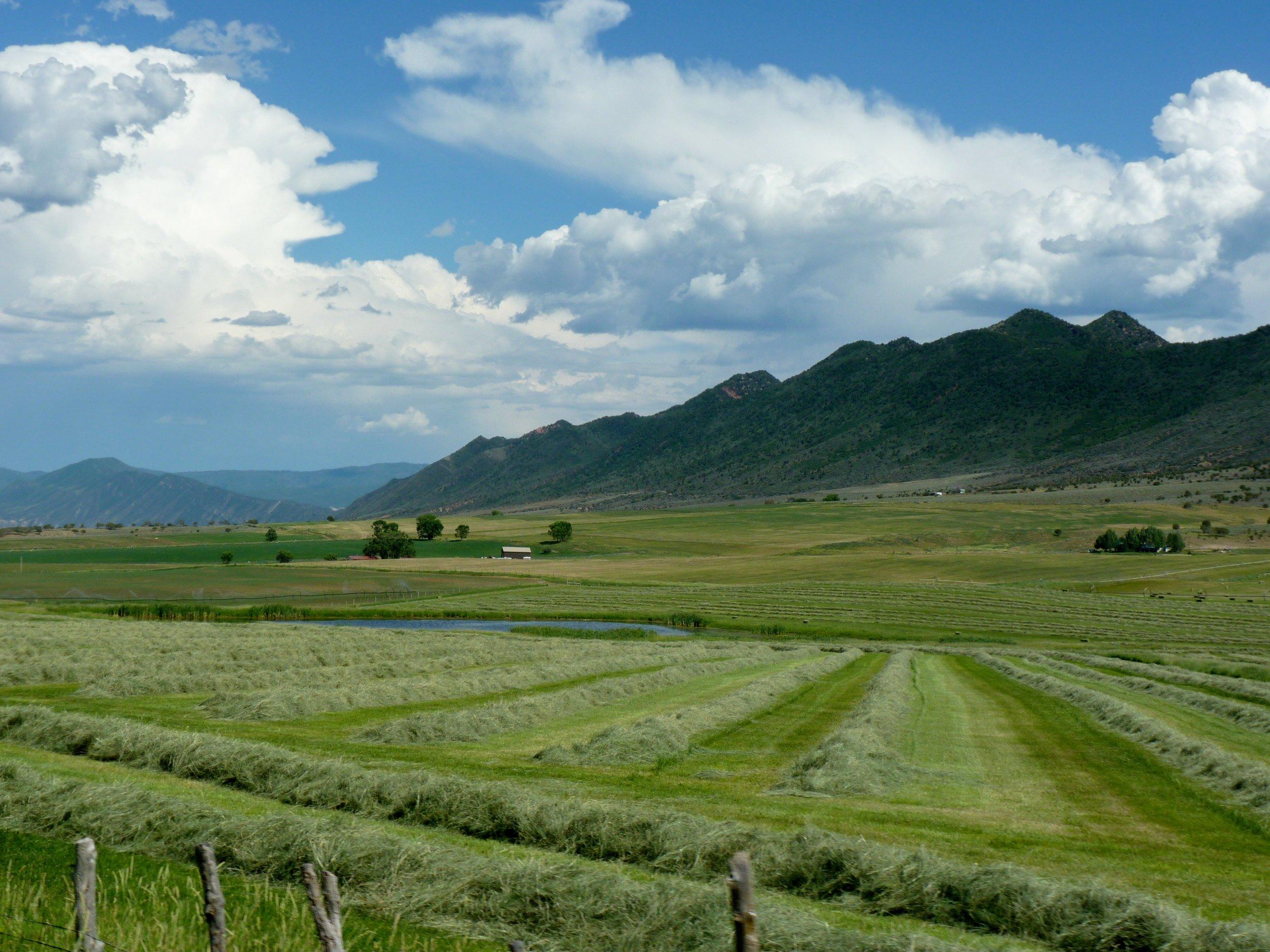 fresh cut hay Laurie DeMent.jpg