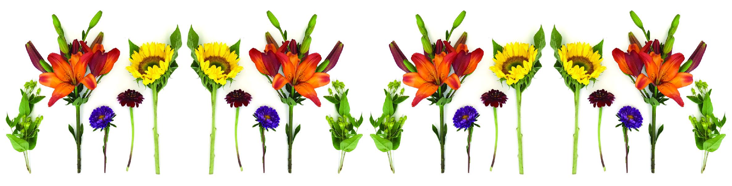 HJF Website Flower Border 1.jpg