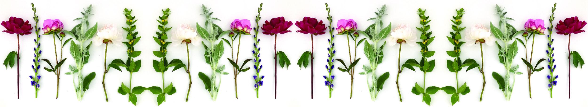 HJF Website Flower Border 2.jpg