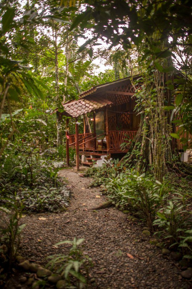 Jungle Bungalow.jpeg