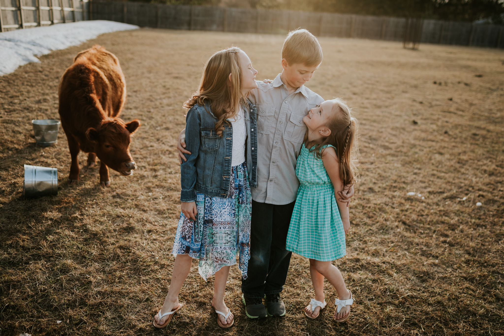 two sisters and their brother and a brown cow - Minnesota Family Photographer