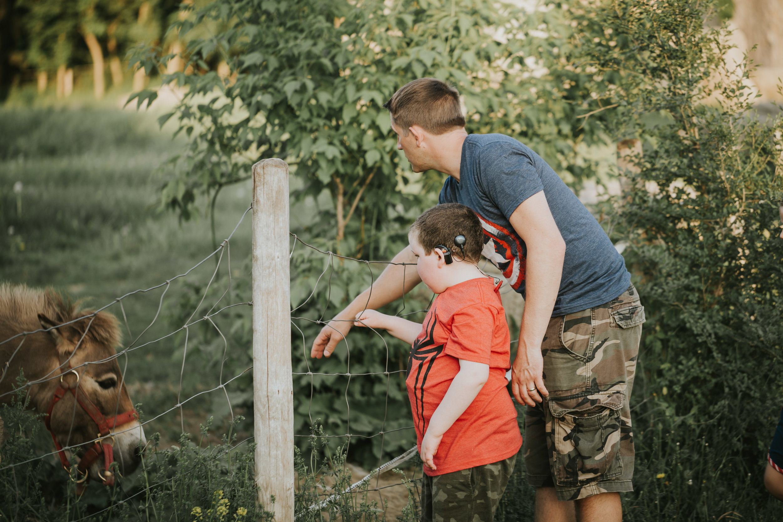 dad and boy looking at a donkey on a farm - Twin Cities Family Photography
