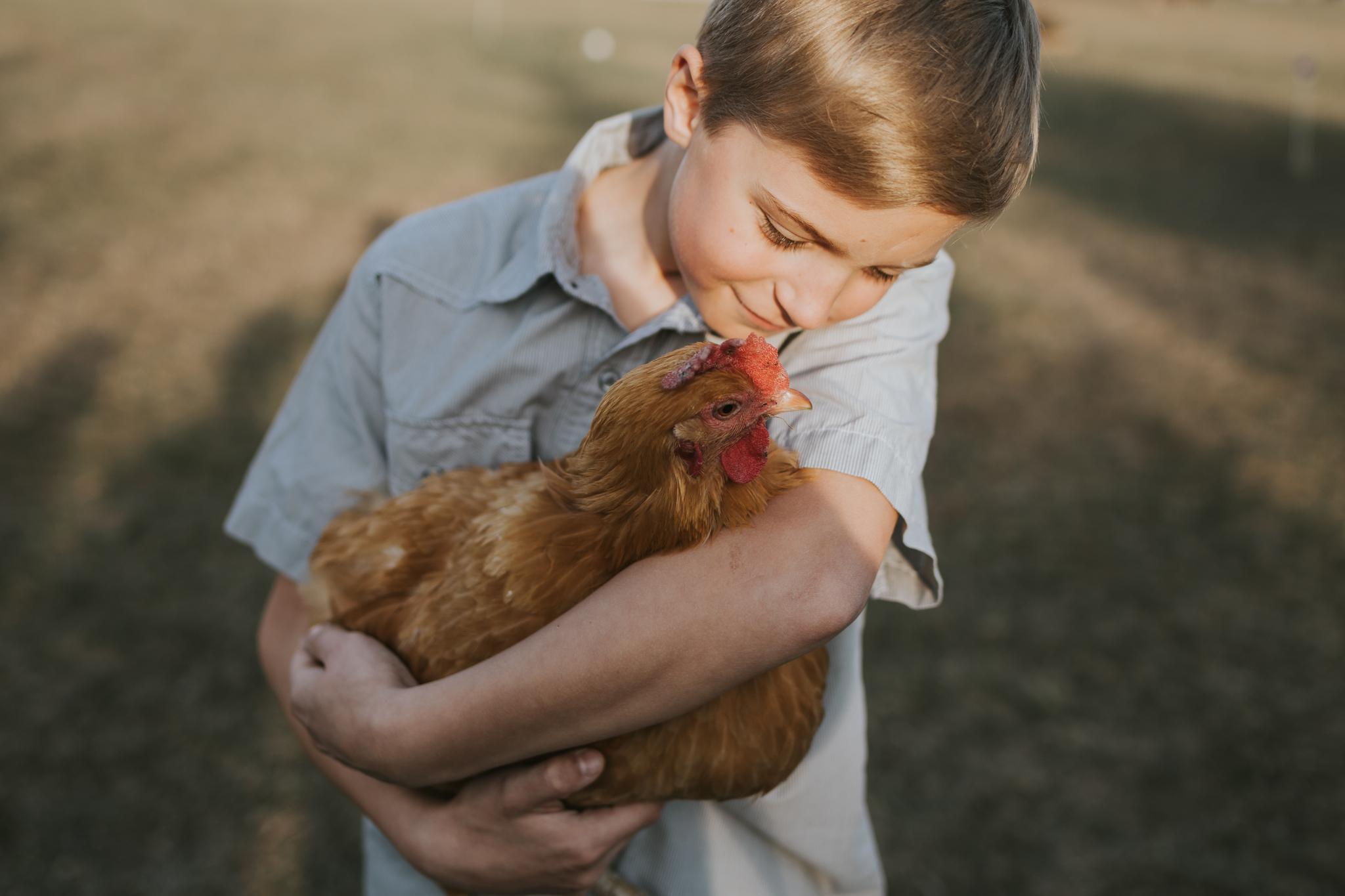 little boy holding a chicken - Minnetonka Family Photographer