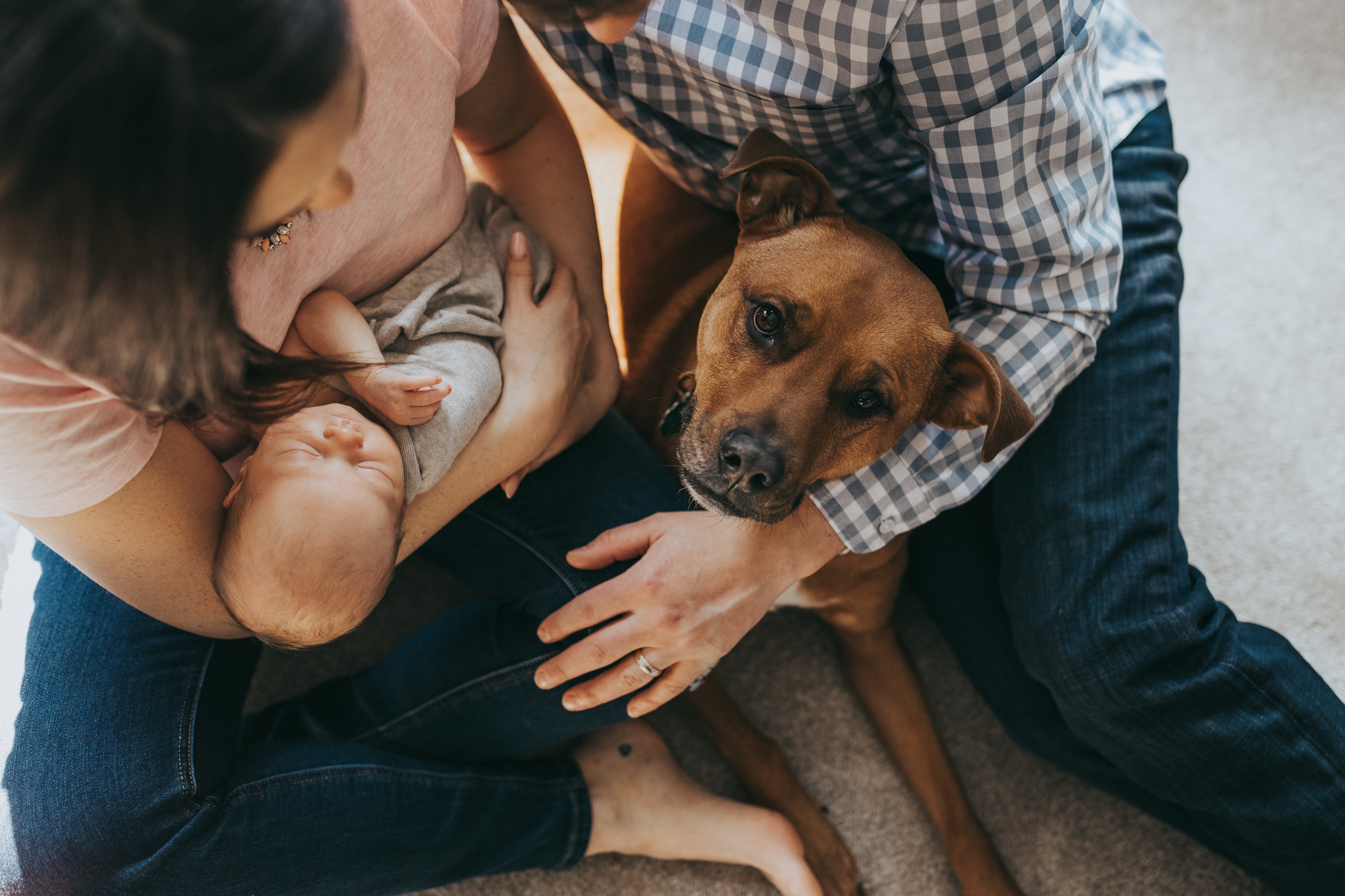 family dog with newborn baby and parents - AMG Photography