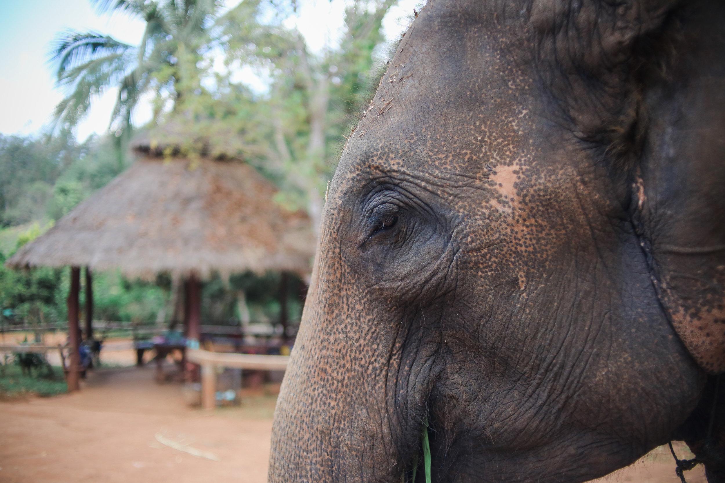 elephant_blog-1.jpg