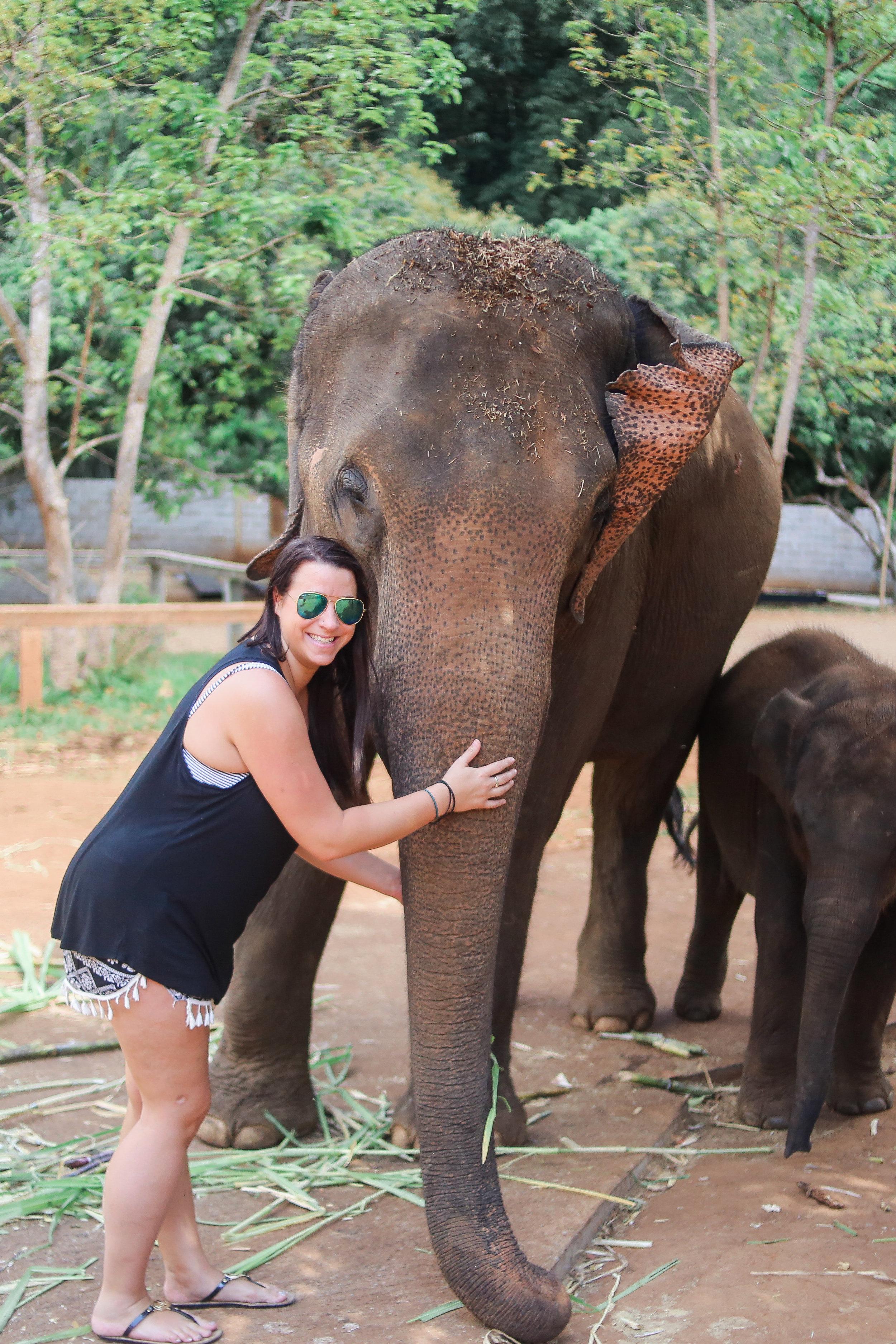 elephant_blog-7.jpg