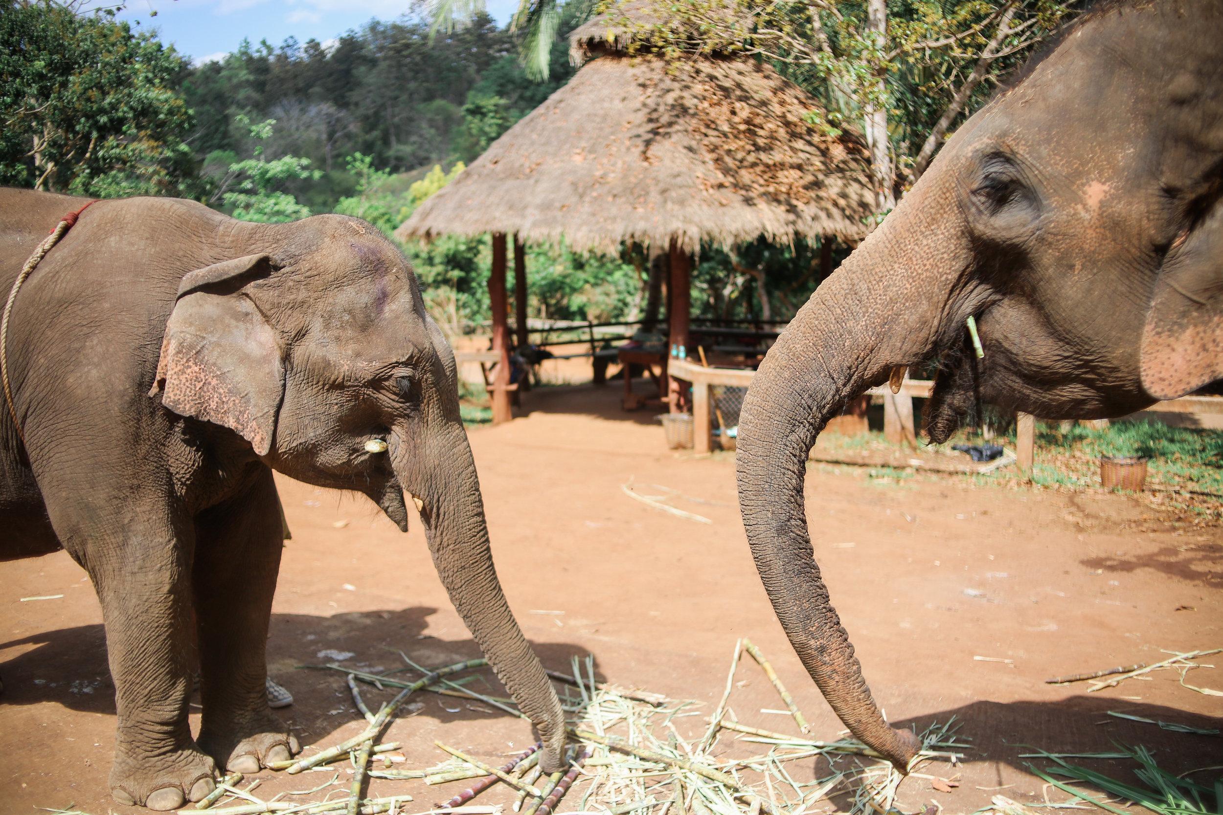 elephant_blog-8.jpg