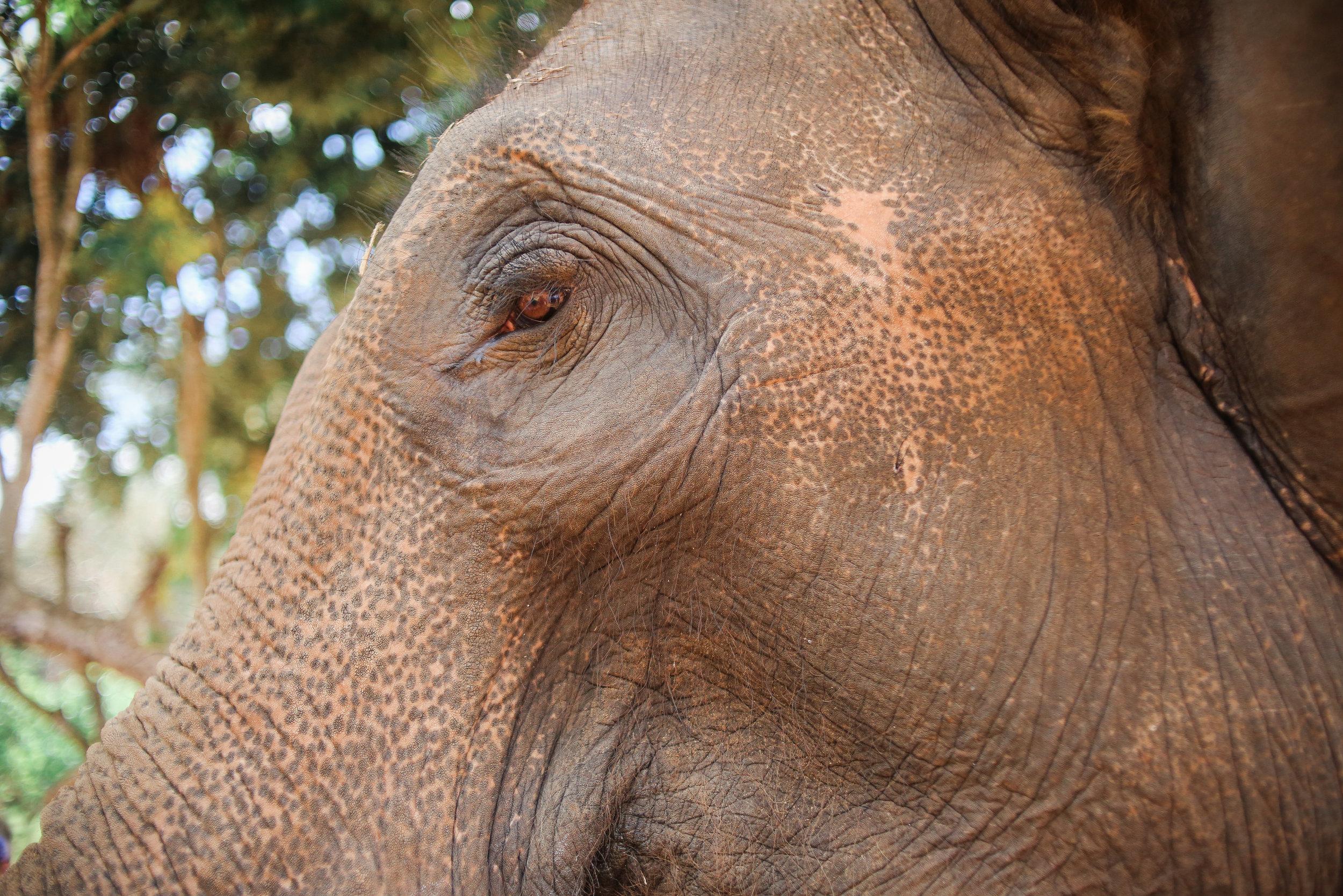 elephant_blog-9.jpg