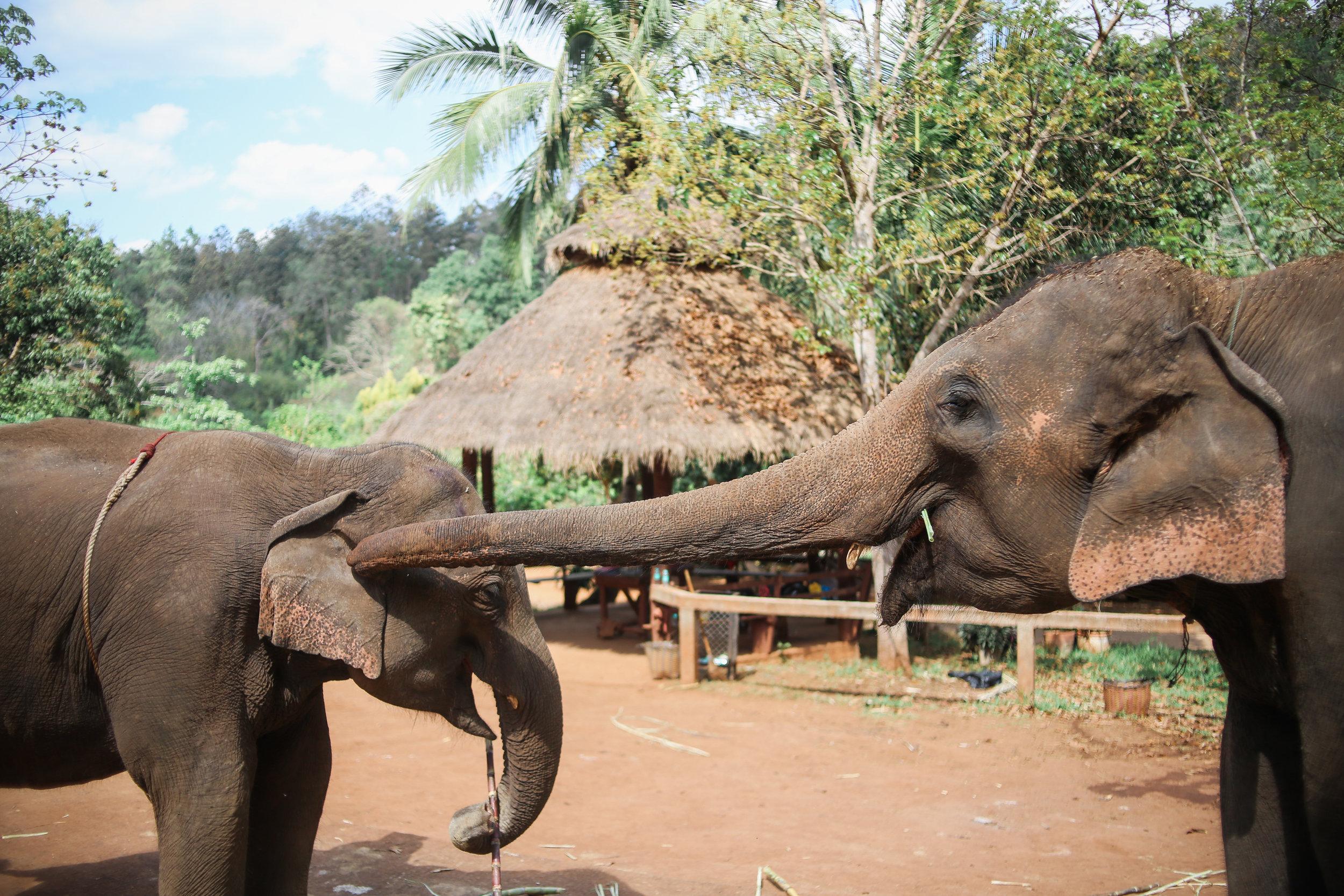 elephant_blog-11.jpg