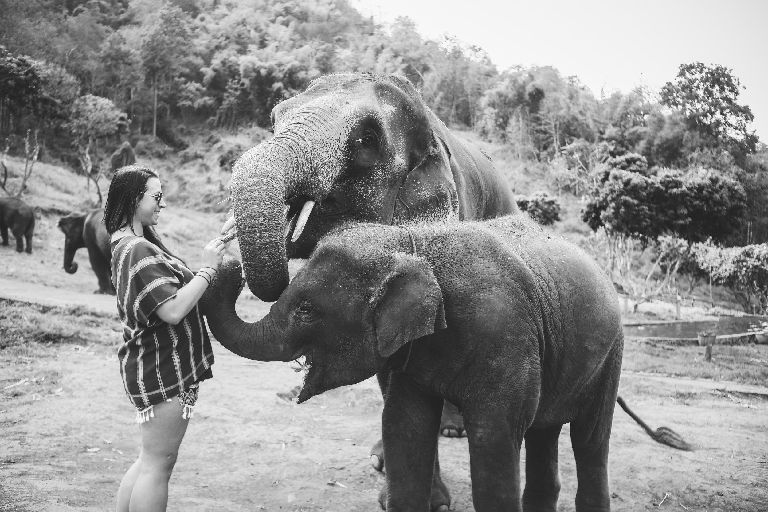 elephant_blog-12.jpg