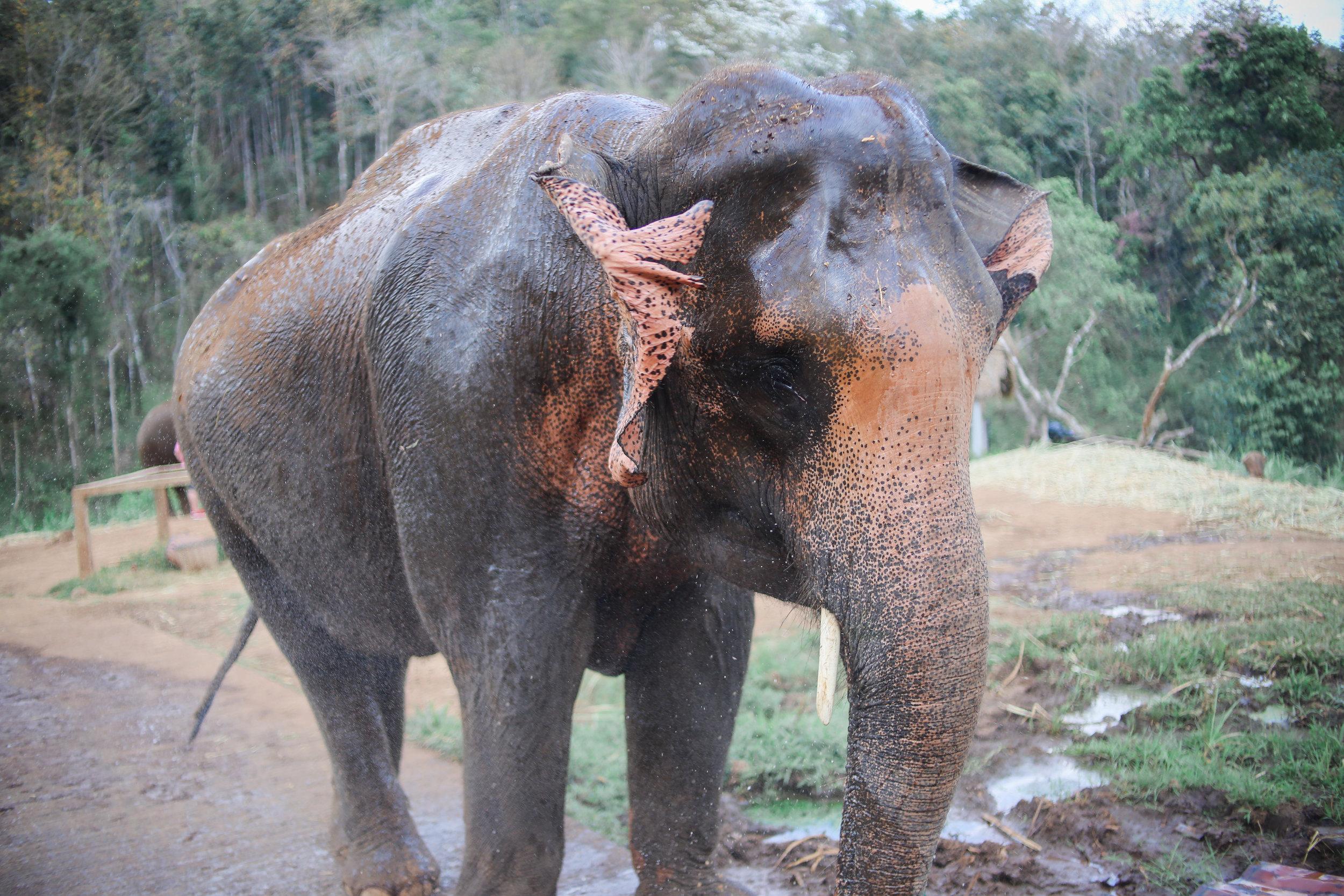 elephant_blog-24.jpg