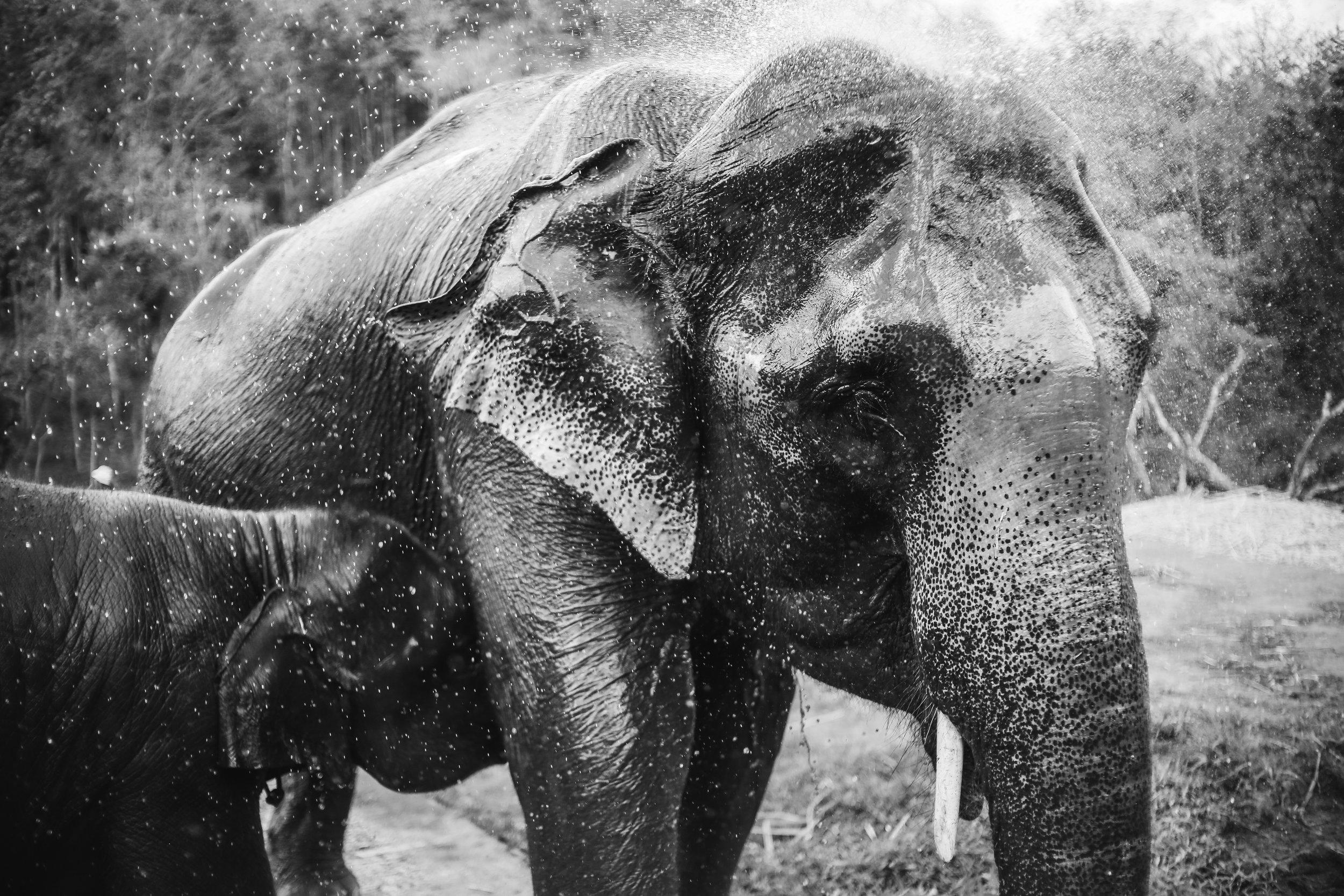elephant_blog-27.jpg