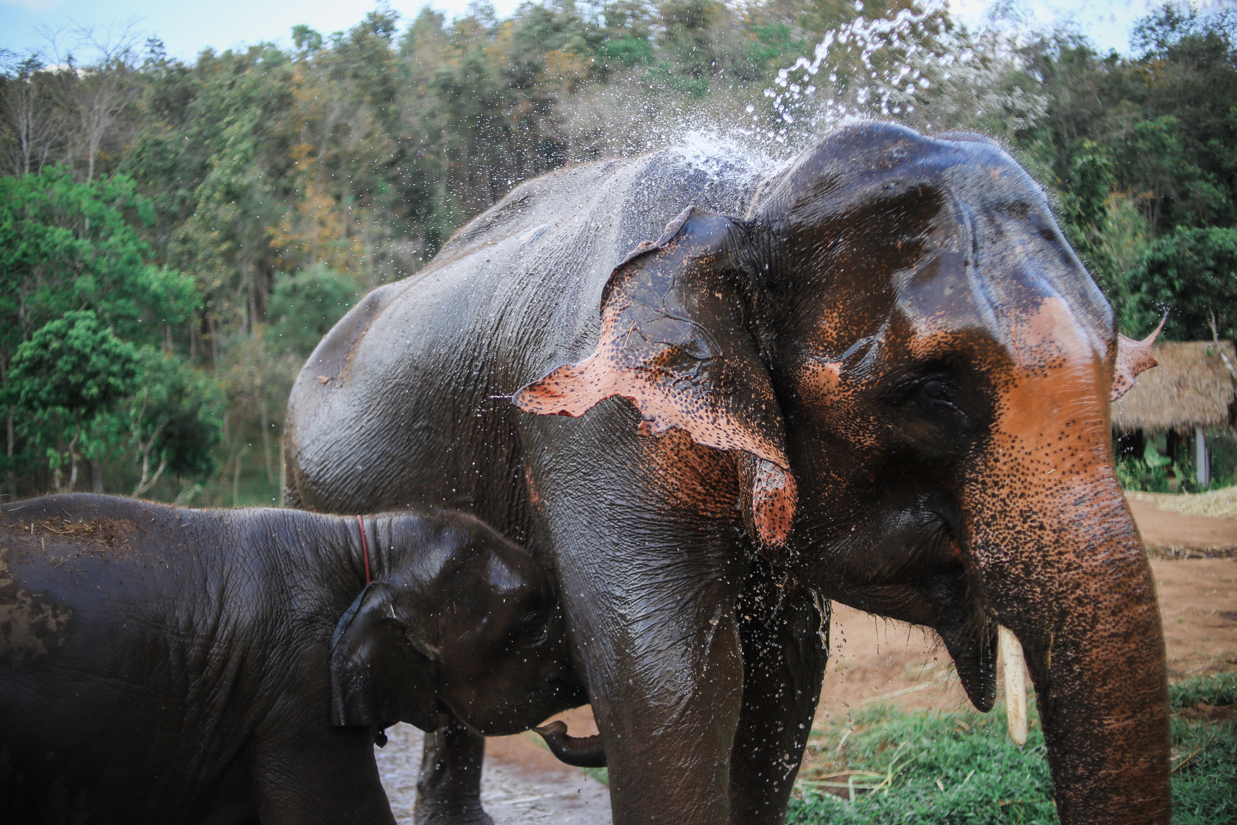 elephant_blog-28.jpg