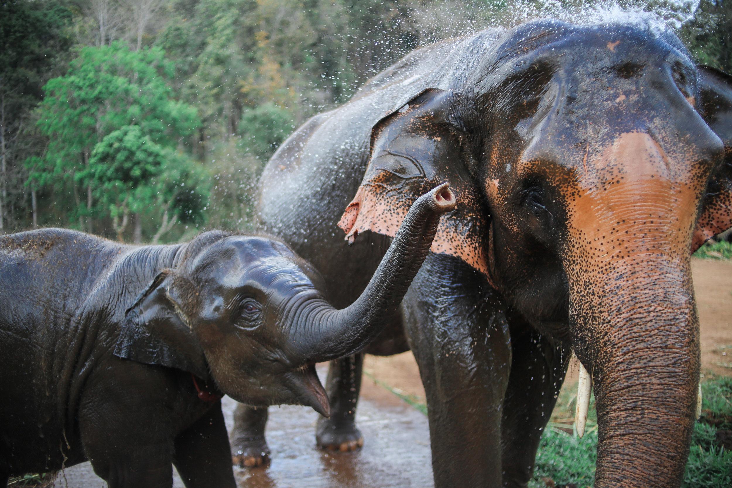 elephant_blog-29.jpg