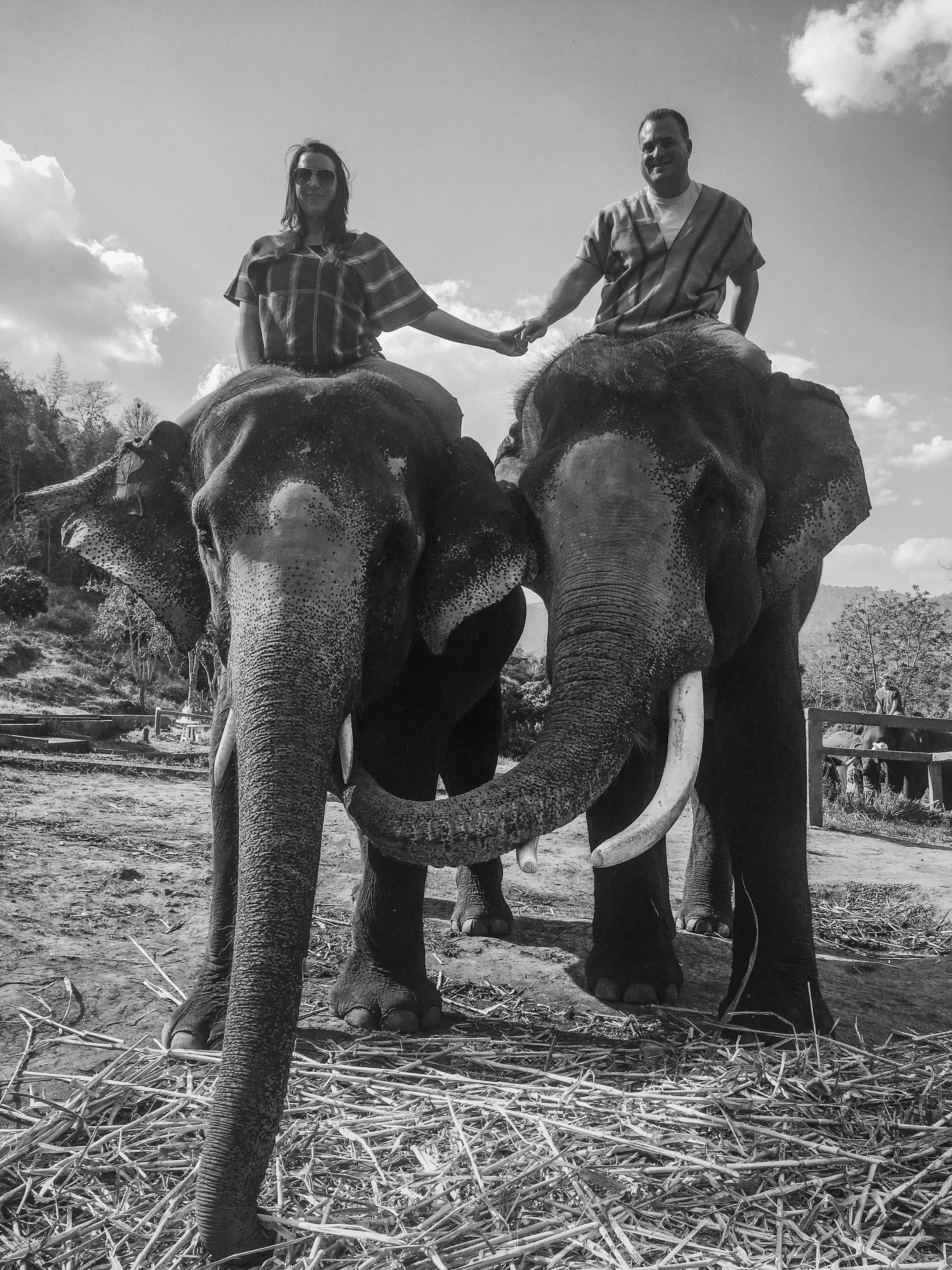 elephant_blog-33.jpg