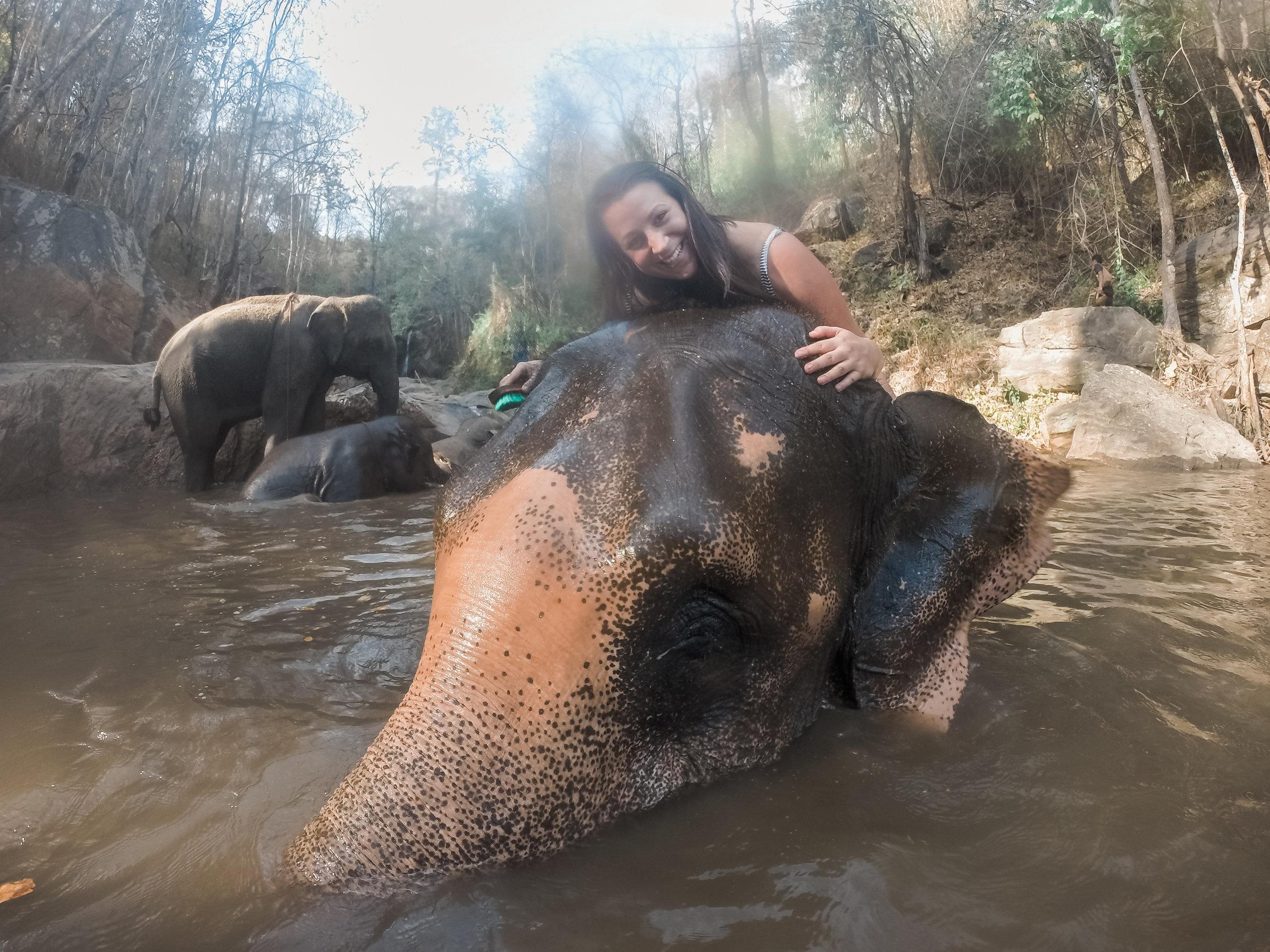 elephant_blog-37.jpg