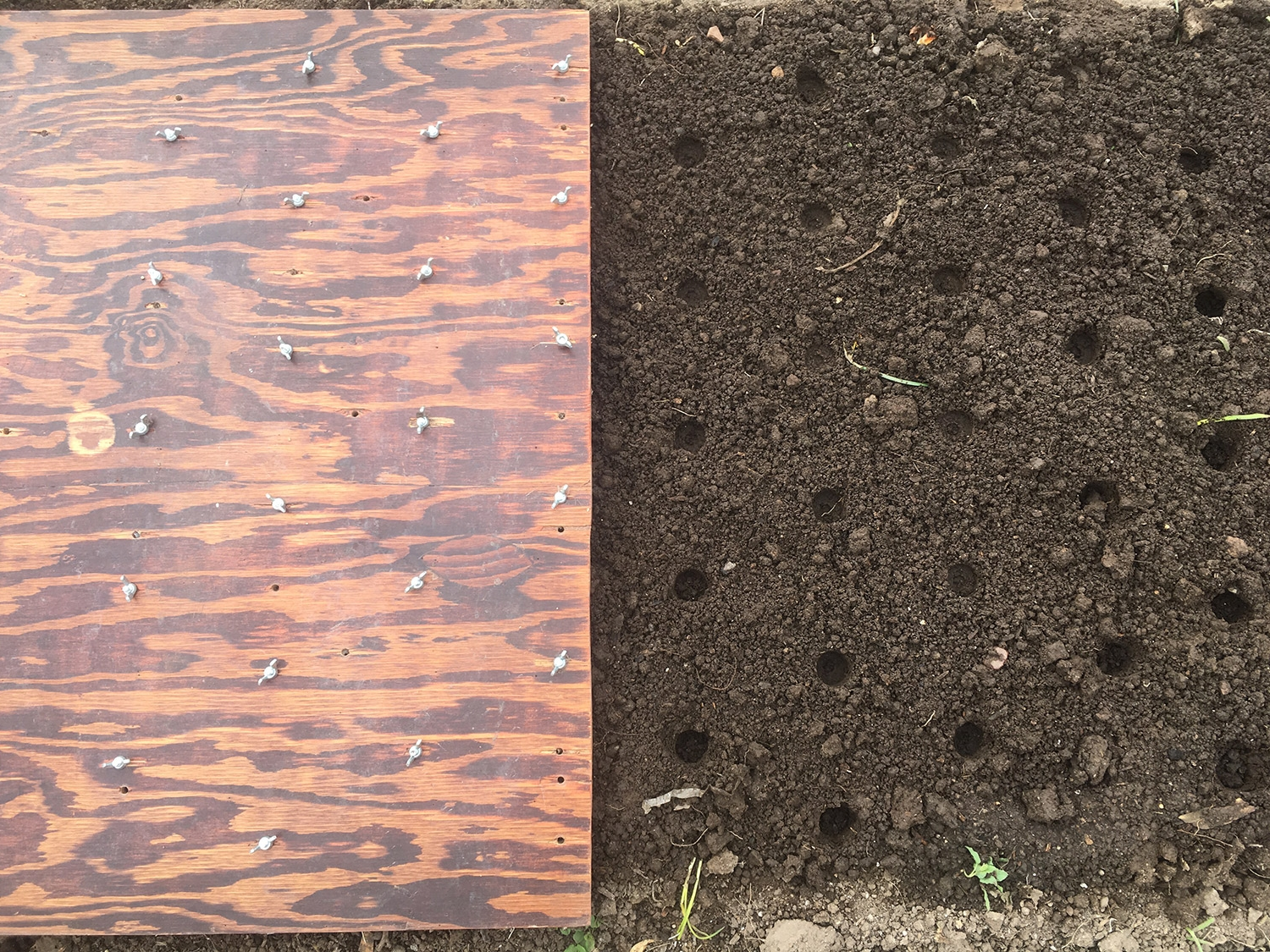 My 6x6 planting board, making those perfect holes. Trigonometry, yo! Also, weeds.