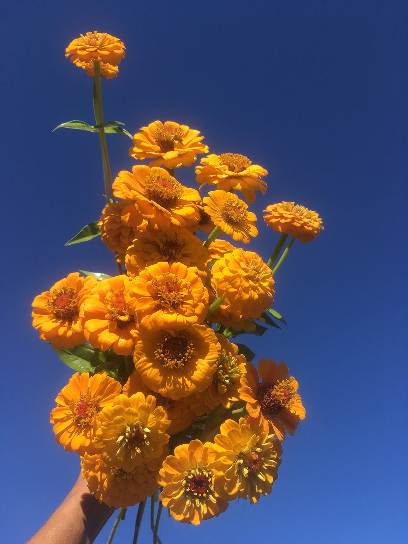 'Oklahoma Golden Yellow'