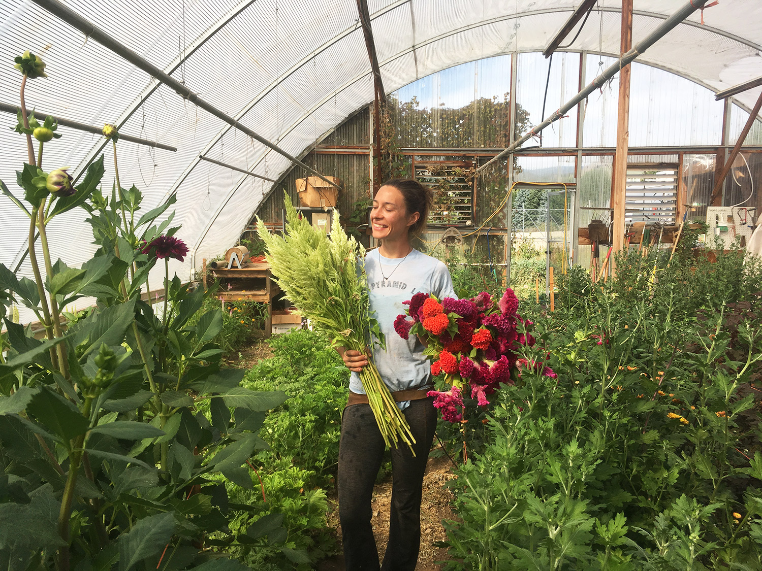 In the hoop house with Celosia 'Sylphid', 'Cramer's Burgundy', 'Chief Persimmon' and 'Cramer's Rose'.