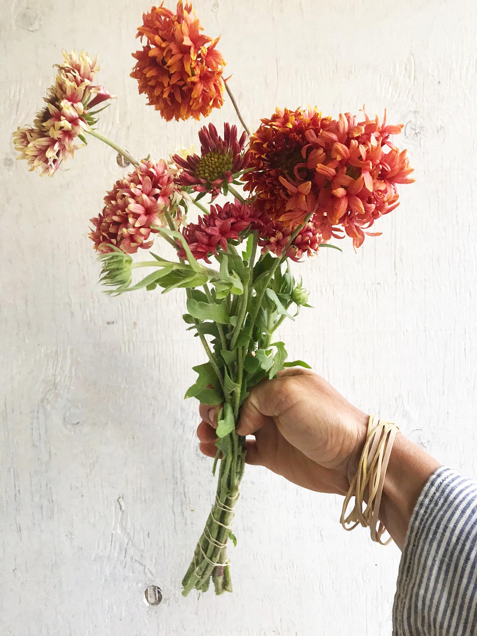 Blanket Flower - Lorenziana